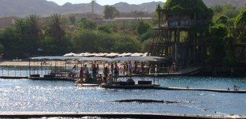 Bild zu Dolfinim | Eilat