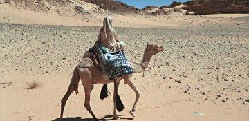 Bild zu Meditative Wüstenreisen | Sinai